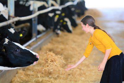 girl-cow.jpg